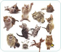 Obrázok pre výrobcu podložka pod myš - Mačky