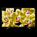 """Obrázok pre výrobcu Sony 43"""" 4K HDR TV KD-43XG8096BAEP"""